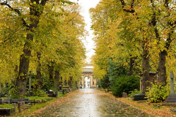 Autumn leaves in Brompton Cemetery
