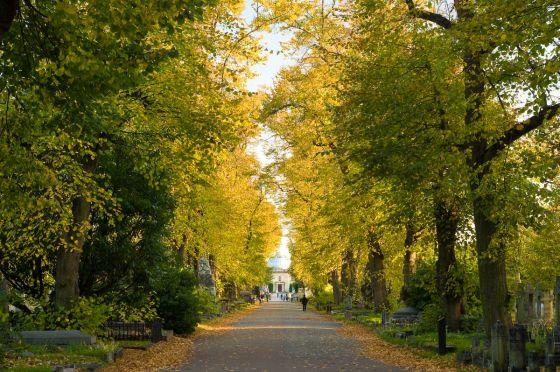 Autumn trees in Brompton Cemetery