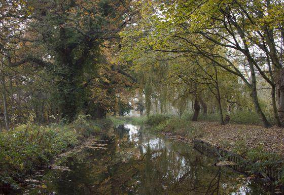 Autumn in the Woodland Gardens