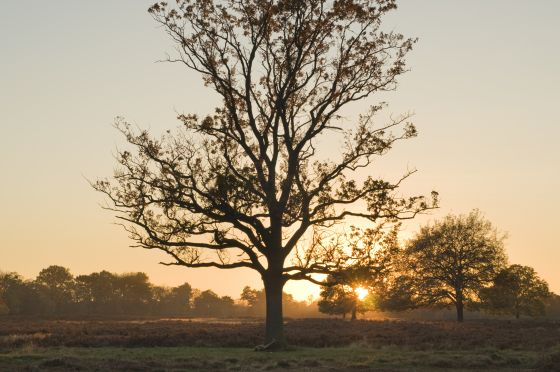 Hare Warren Sunset