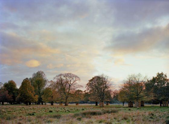 Autumn landscape of Bushy Park