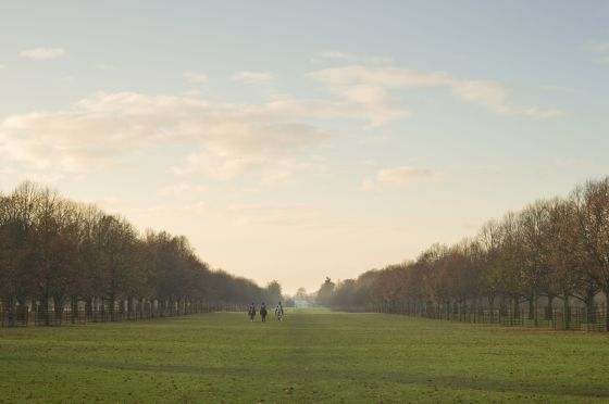 View of Lime Avenue in autumn