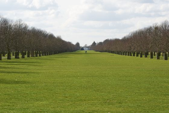 View down Lime Avenue towards White Lodge