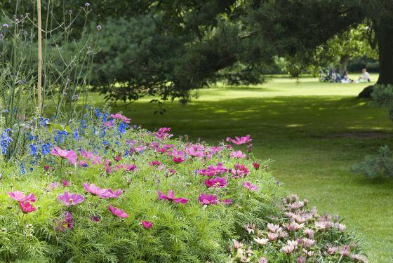 Summer flower beds
