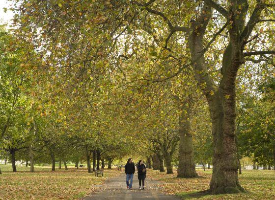 Lover's Walk in Autumn