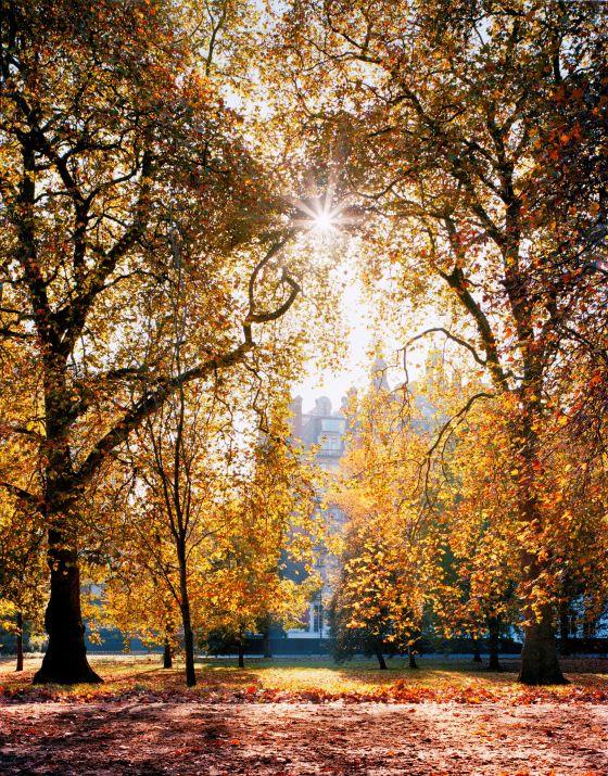 Rotten Row in autumn