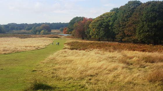 Autumnal day in Richmond Park