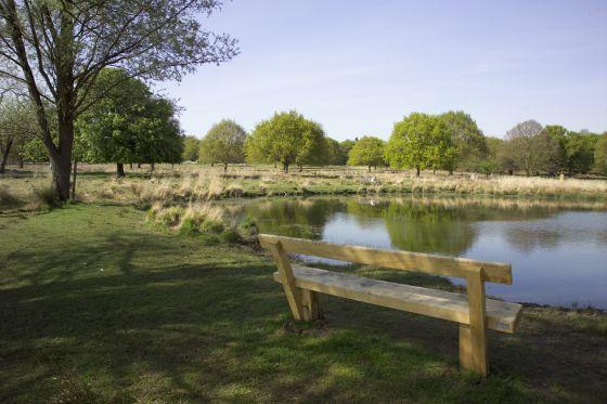 White Ash Pond