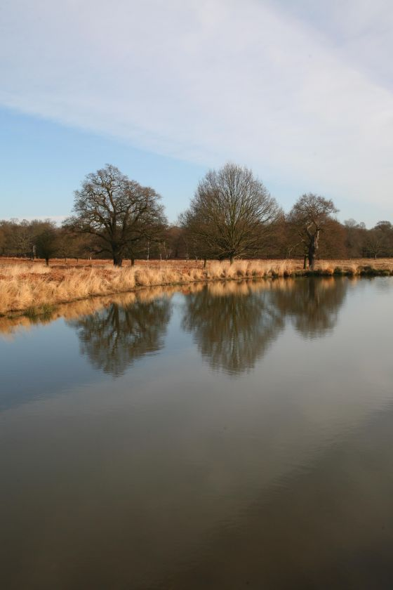 Reflections on Pen Ponds