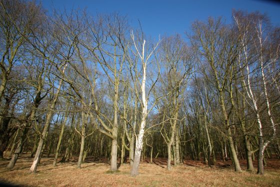 Sidmouth Woods