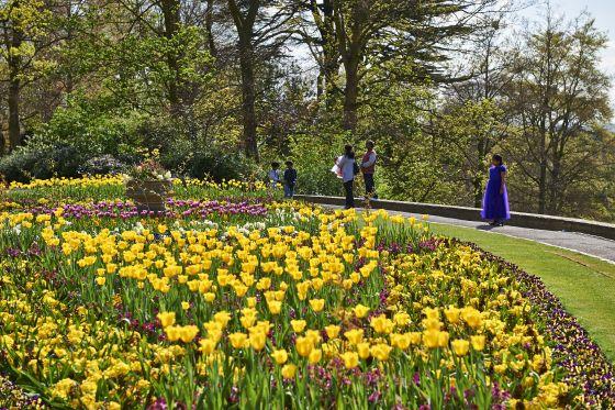Pembroke Lodge Rose Garden