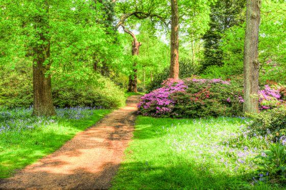 Isabella Plantation in full bloom