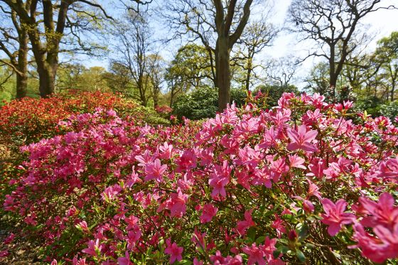 Bright flowers in the Isabella Plantation