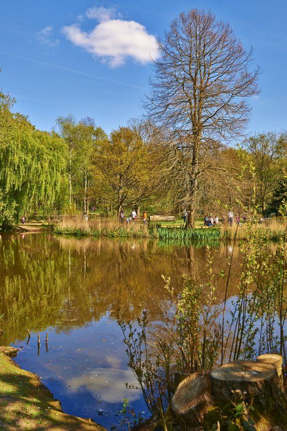 Reflections on Peg's Pond