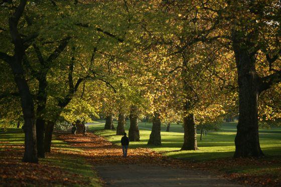 Avenue of autumn trees