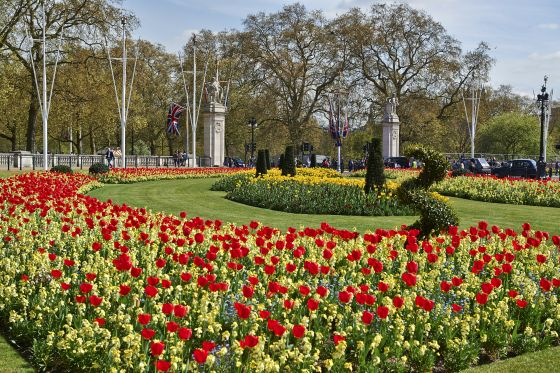 Buckingham Palace flower beds
