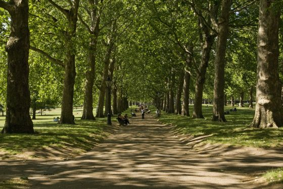 The Broad Walk in The Green Park