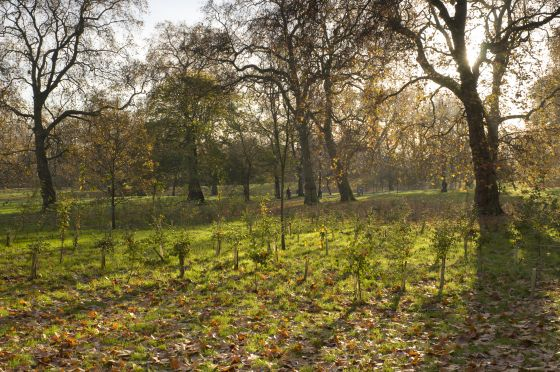 New trees planted in autumn