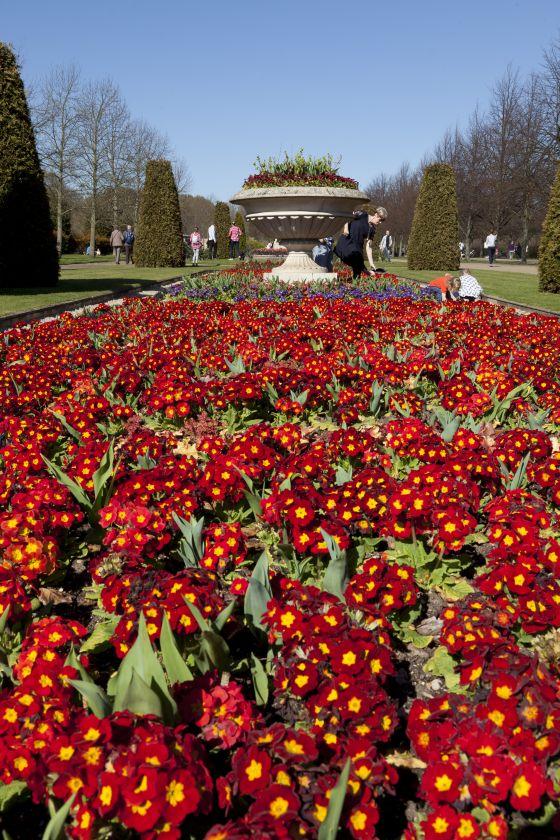 Avenue Gardens Flower Bed