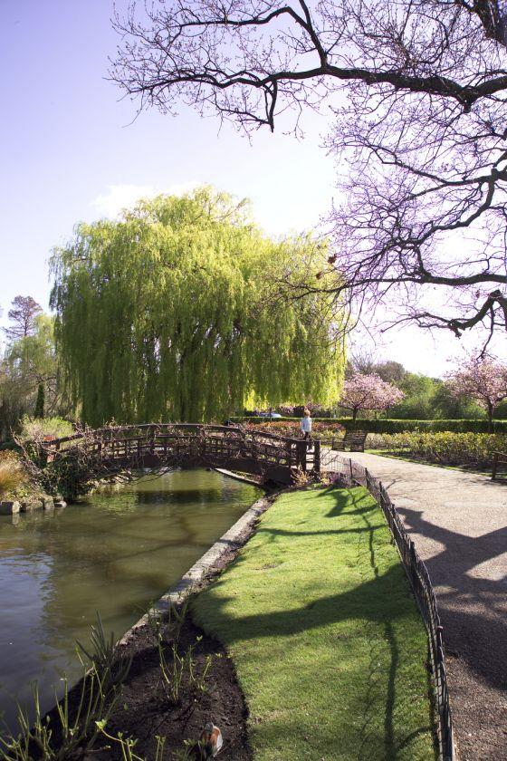 Bridge in Queen Mary's Garden